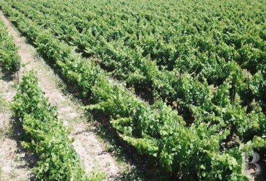 domaine viticole - 7