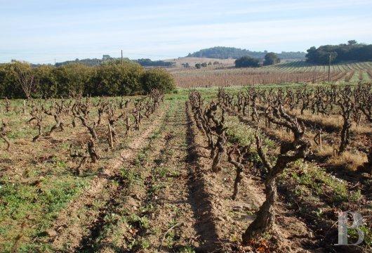 domaine viticole - 11