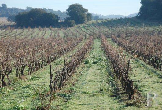domaine viticole - 12
